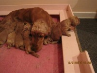 pups  day 2 through to 30th jan 2012 005.jpg